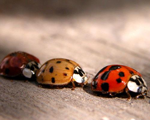 ladybirdtrafficjam