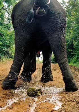 elephant-splash