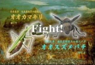 Japanese Bug Fights.com